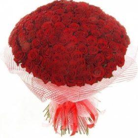 201 червона троянда фото