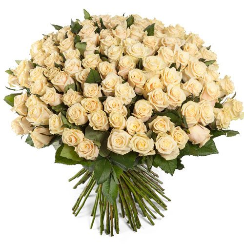 букет 101 кремова троянда