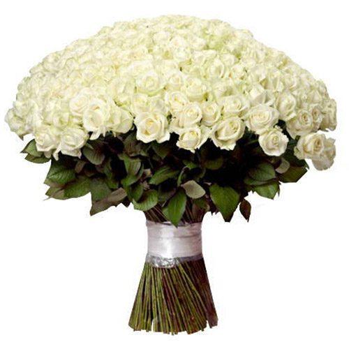 фото товару 201 біла троянда