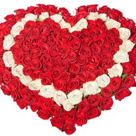 фото 101 троянда серцем: червона, біла, червона