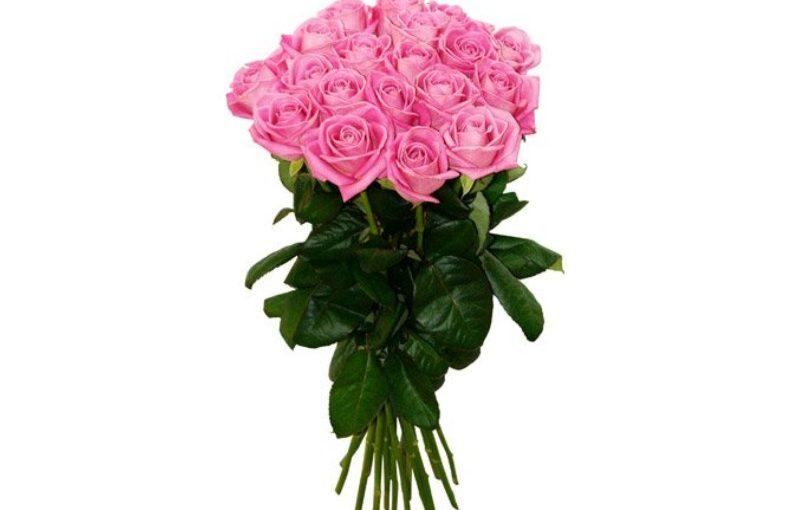 21 троянда аква