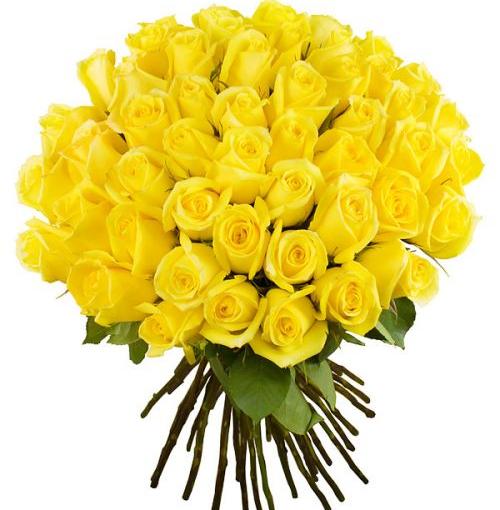51 жовта троянда фото