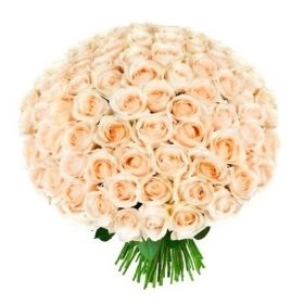 101 кремова троянда фото