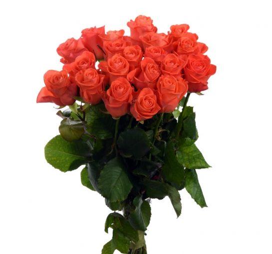 21 троянда вау