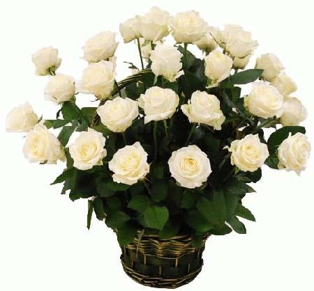 35 білих троянд в кошику фото