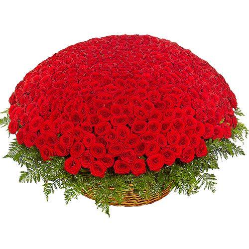 фото 1001 червона троянда