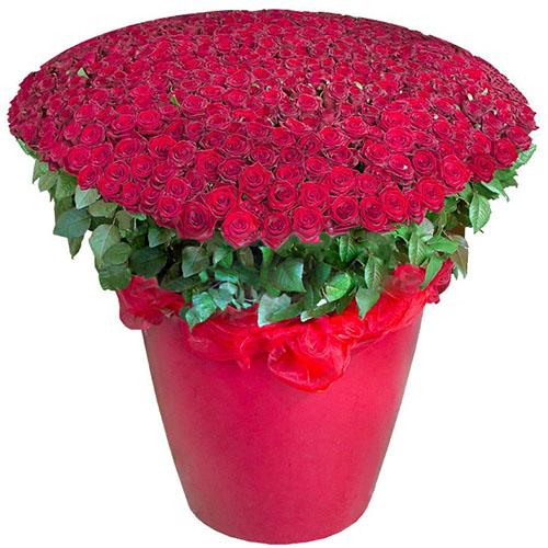 букет 301 червона троянда у великому вазоні