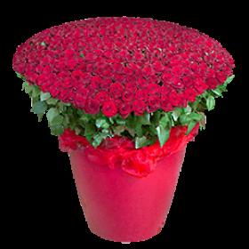 300 червоних троянд