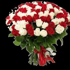 білі та червоні троянди