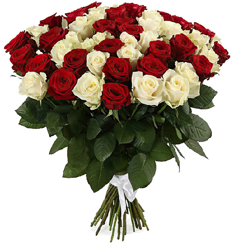 фото 51 червона та біла троянда