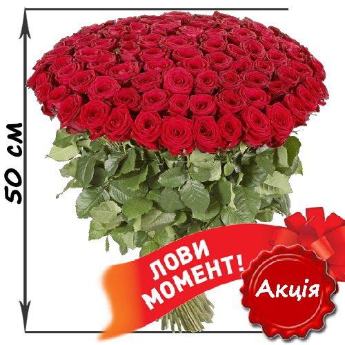 акція 101 червона троянда (50см)