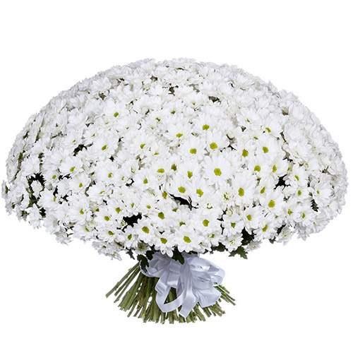 букет 101 ромашкова хризантема фото