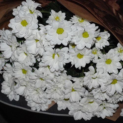 фото товару 11 білих хризантем