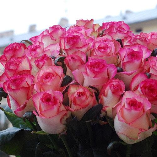 """фото квітів 25 троянд """"Джумілія"""""""