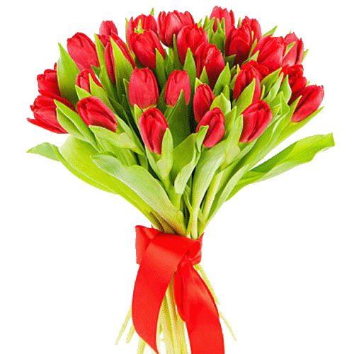фото 25 червоних тюльпанів