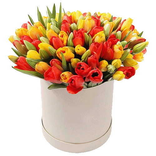 фото 101 тюльпан у капелюшній коробці