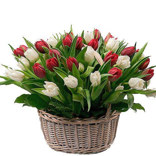 фото 51 тюльпан у кошику від магазину квітів франківськ