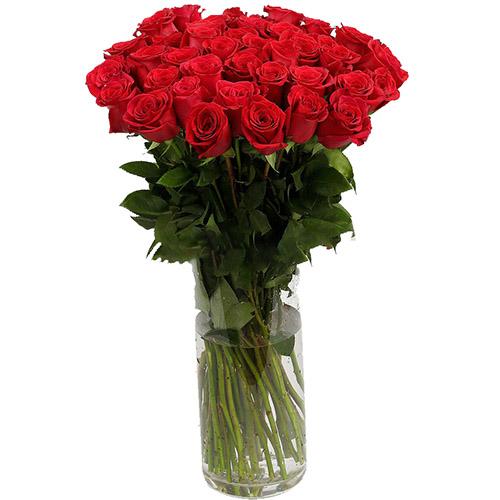 фото товару Роза імпортна червона
