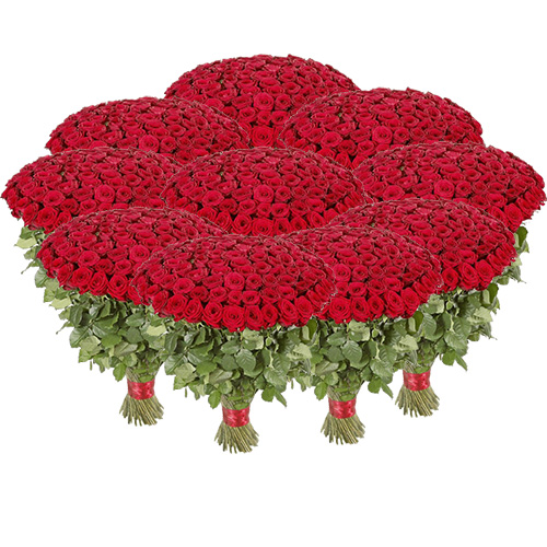 1001 червона троянда