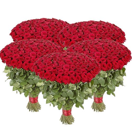 фото 501 червона троянда